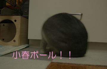 2008-08-18-015.jpg