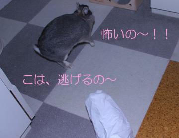 2008-08-31-010.jpg