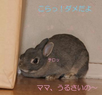 2008-09-07-066.jpg