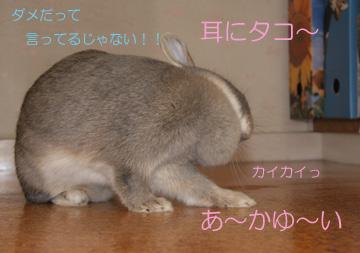 2008-09-07-074.jpg