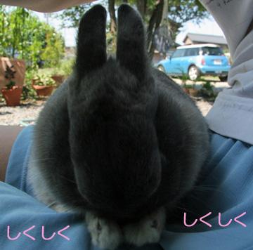 2008-09-09-017.jpg