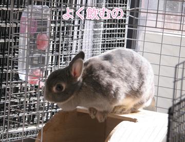 2009-02-05-045.jpg
