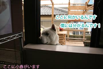 2009-05-06-005.jpg
