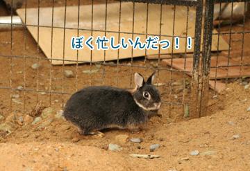 2009-05-31-040.jpg
