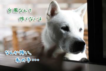 2009-10-08-006.jpg