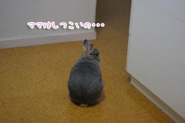 2009-10-08-014.jpg