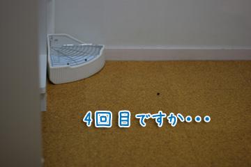 2009-10-08-015.jpg