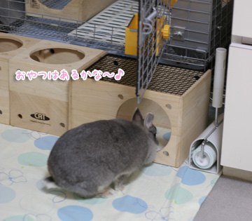 2009-10-12-019.jpg