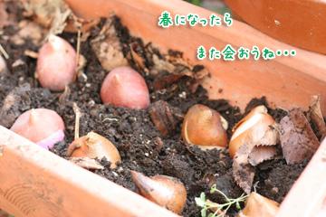 2009-11-03-007.jpg