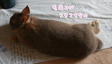 2009.11.04.06.jpg