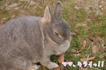 2010-01-11-095.jpg