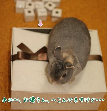 2010-02-26-101.jpg