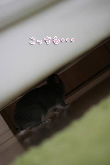 2010-04-10-054.jpg