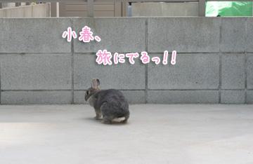 2010-04-10-143.jpg