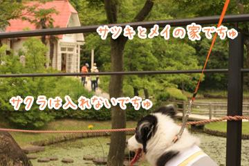 2010-06-06-075.jpg