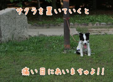2010-06-24-018.jpg