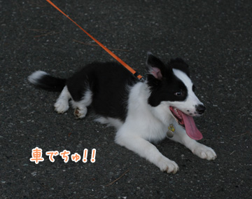2010-07-10-017.jpg