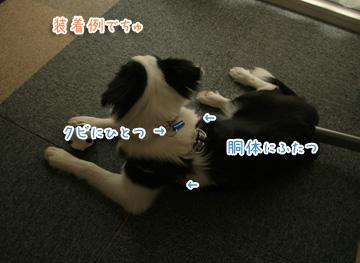 2010-07-28-038.jpg