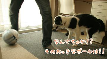 2010-08-01-030.jpg