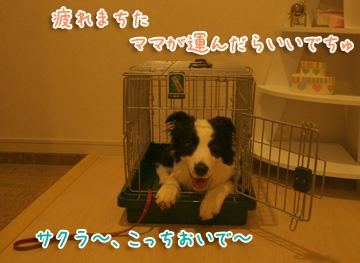 2010-08-07-023.jpg