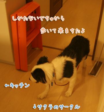 2010-08-07-024.jpg