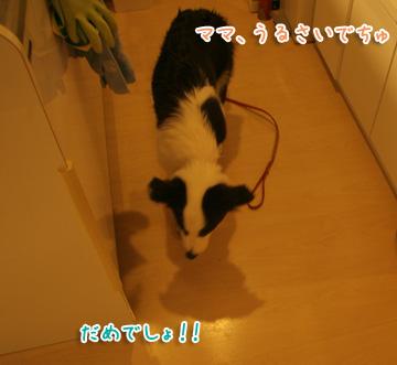 2010-08-07-026.jpg