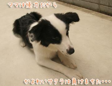 2010-08-08-035.jpg