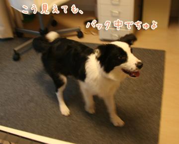 2010-08-17-045.jpg