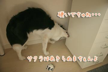 2010-09-01-011.jpg