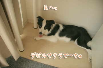 2010-09-01-021.jpg