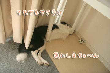 2010-09-01-031.jpg