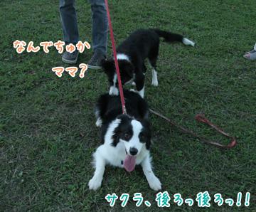 2010-10-10-030.jpg