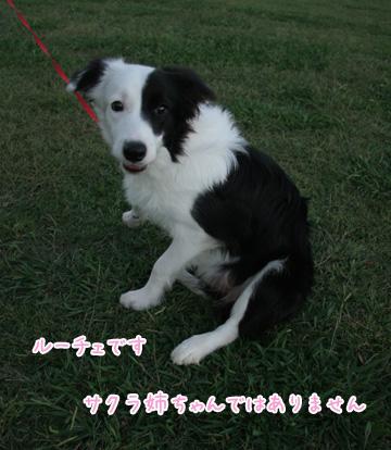 2010-10-10-050.jpg