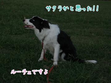 2010-10-10-062.jpg
