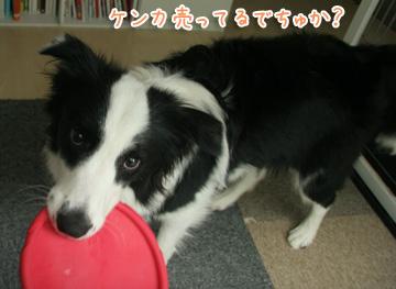 2010-11-01-003.jpg