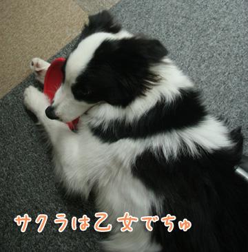 2010-11-01-018.jpg