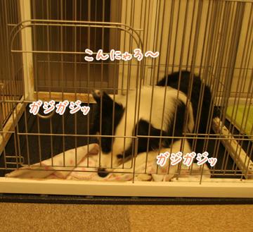2010-11-21-005.jpg