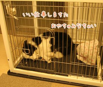 2010-11-21-006.jpg