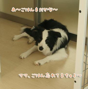 2010-12-06-006.jpg