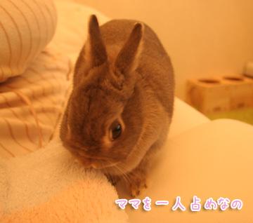 2010-12-09-002.jpg