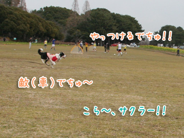 2011-02-20-077.jpg