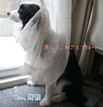 2011-03-15-009.jpg