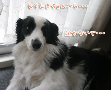 2011-03-15-022.jpg