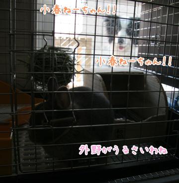2011-04-05-004.jpg