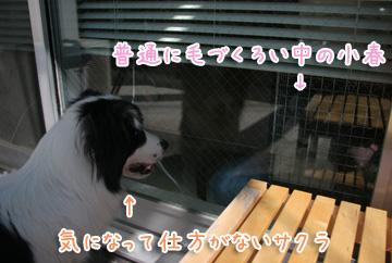 2011-04-05-011.jpg