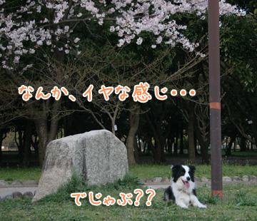 2011-04-09-012.jpg