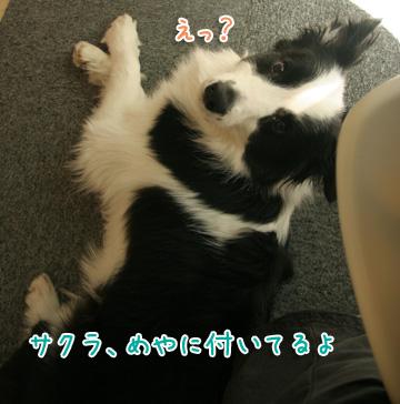 2011-04-10-009.jpg