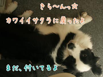 2011-04-10-013.jpg