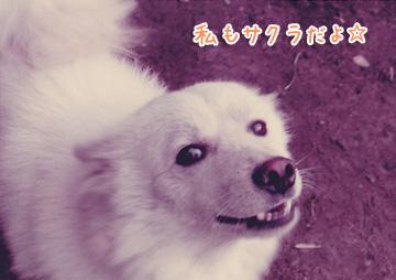 otsuka009.jpg