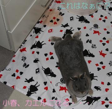 2008-09-07-005.jpg